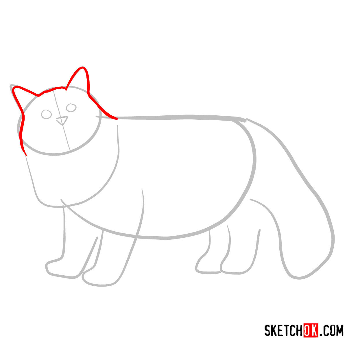 How to draw the Siberian cat - step 02