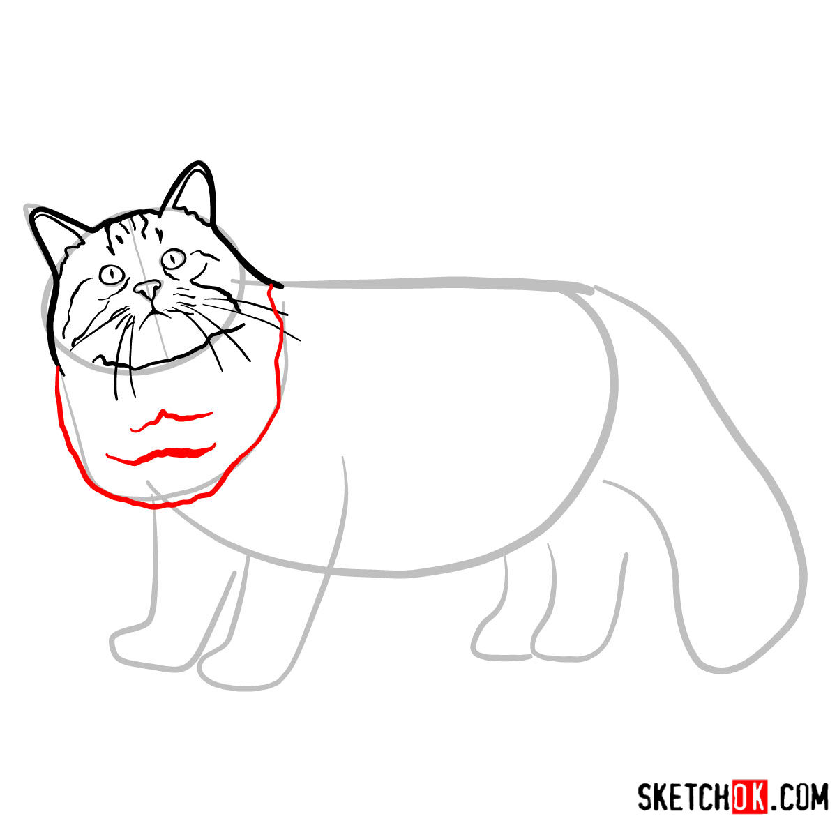 How to draw the Siberian cat - step 05