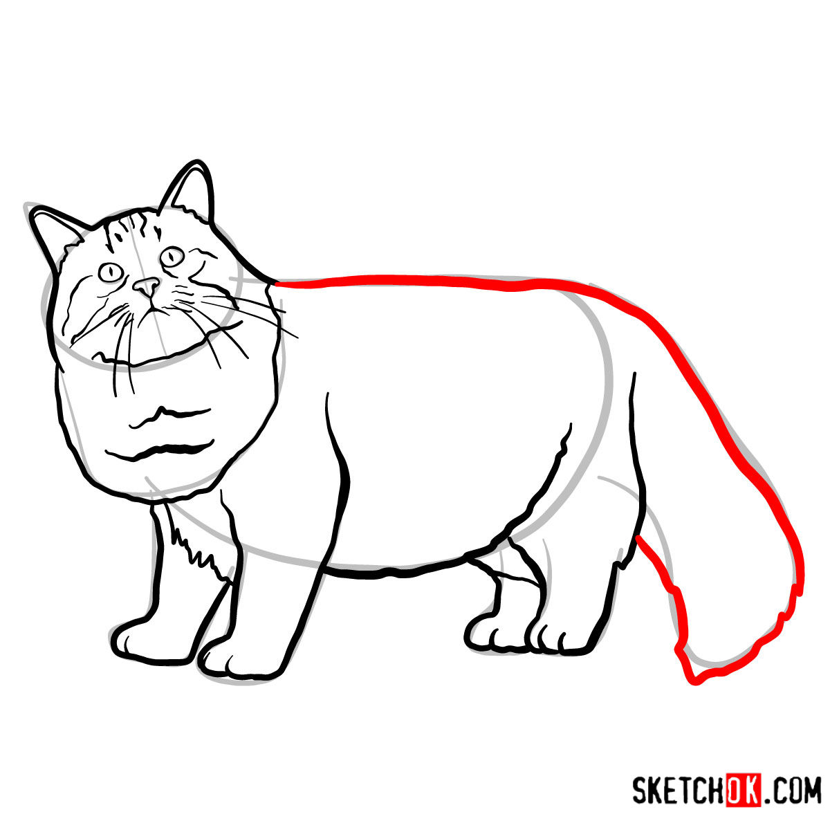 How to draw the Siberian cat - step 10