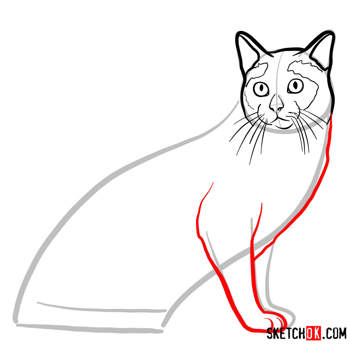 How to draw the Tonkinese cat - step 06
