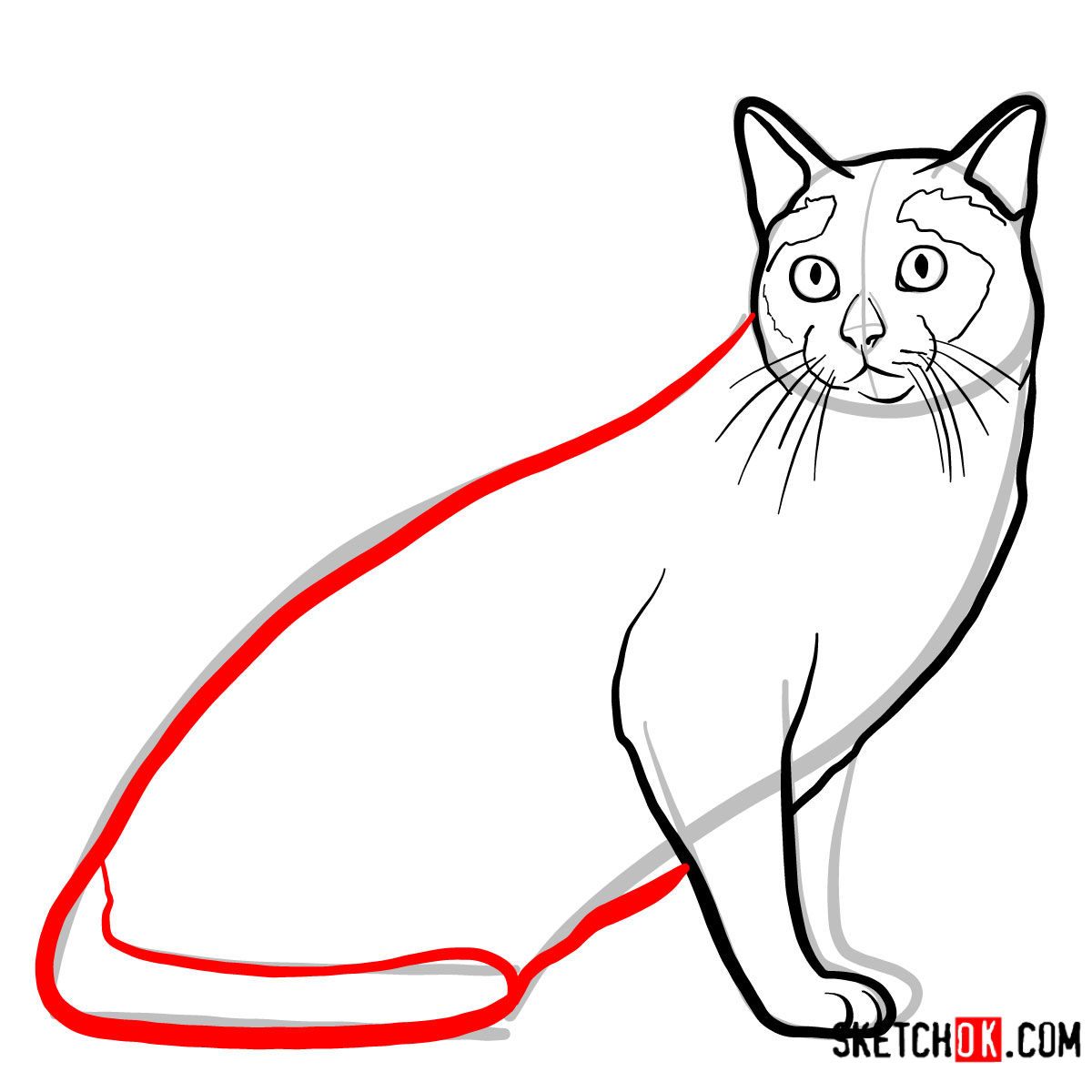How to draw the Tonkinese cat - step 07