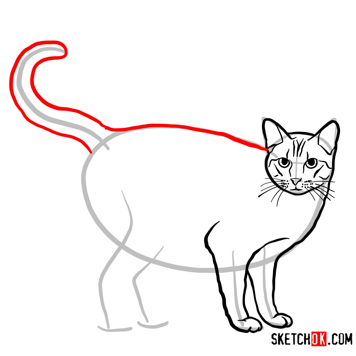 How to draw The Ocicat - step 07