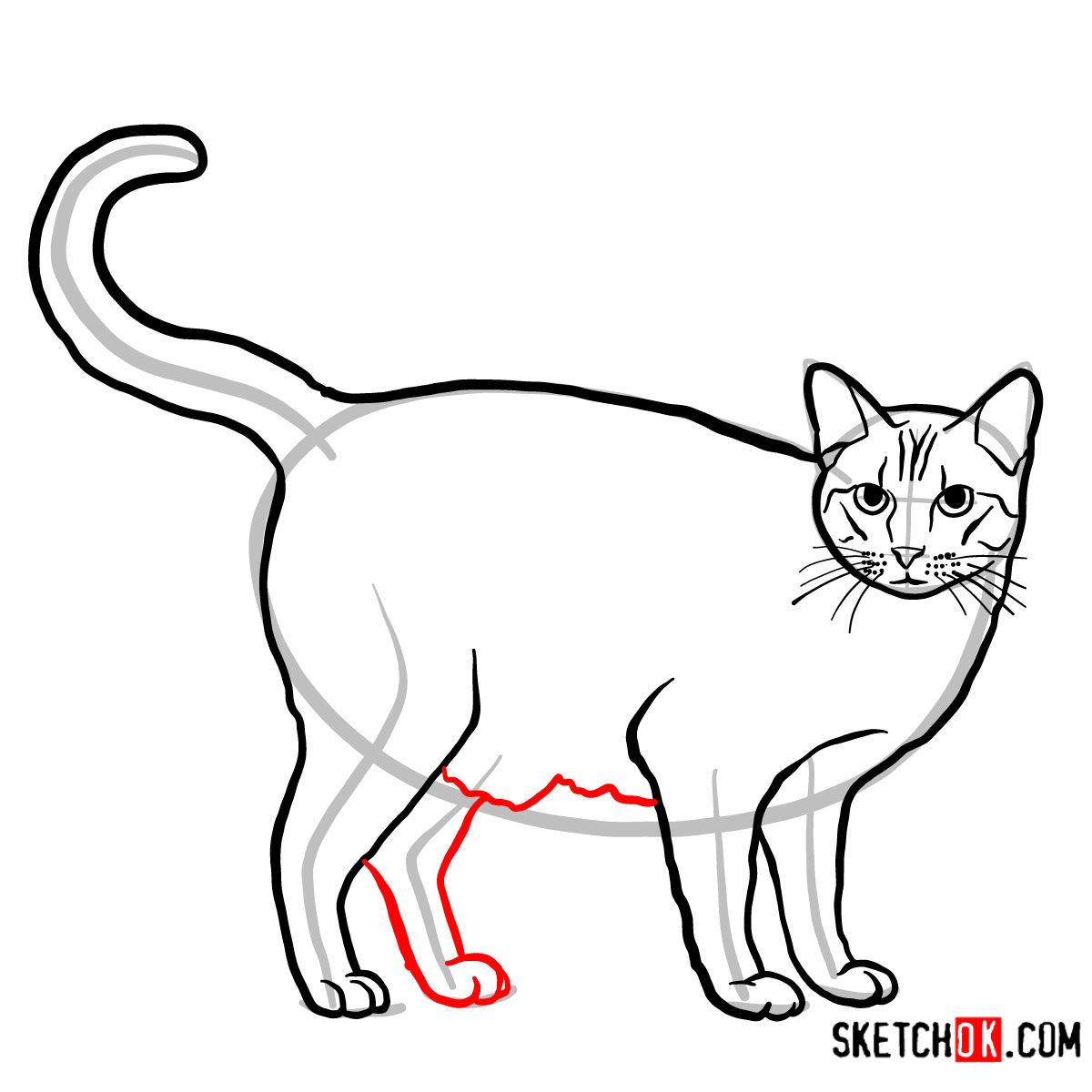 How to draw The Ocicat - step 09