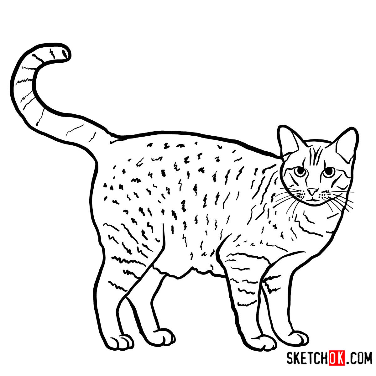 How to draw The Ocicat - step 11