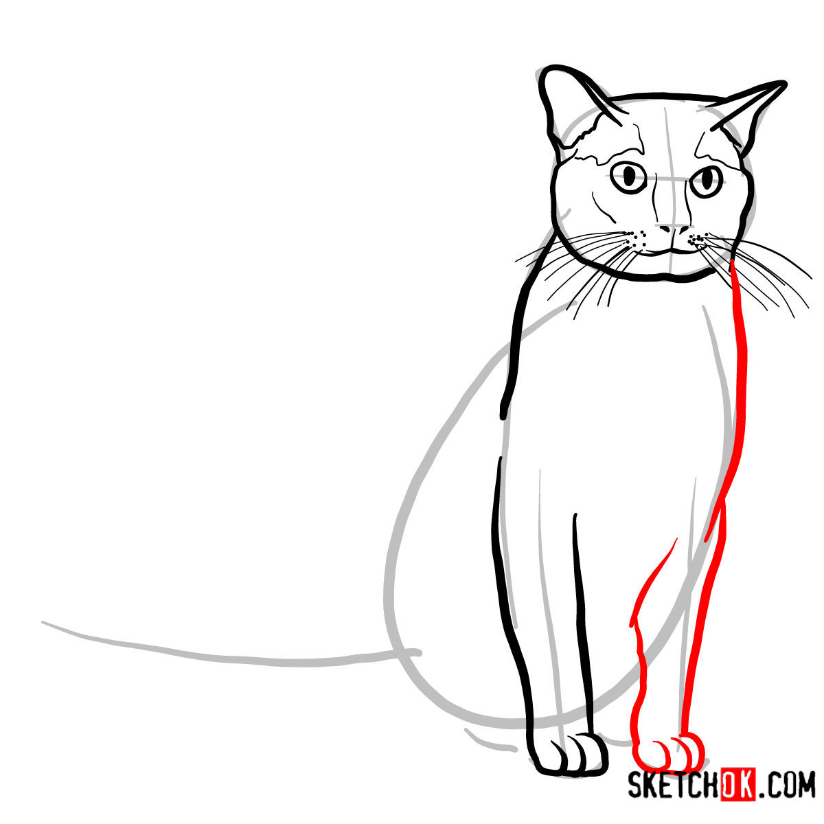 How to draw the Burmese cat - step 06