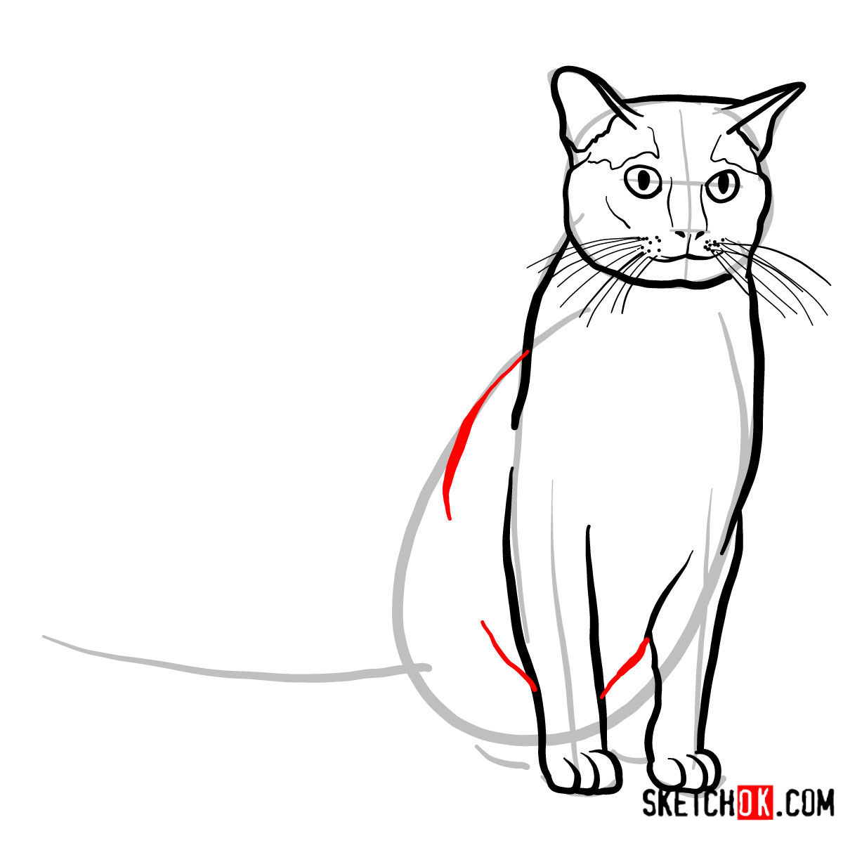 How to draw the Burmese cat - step 07