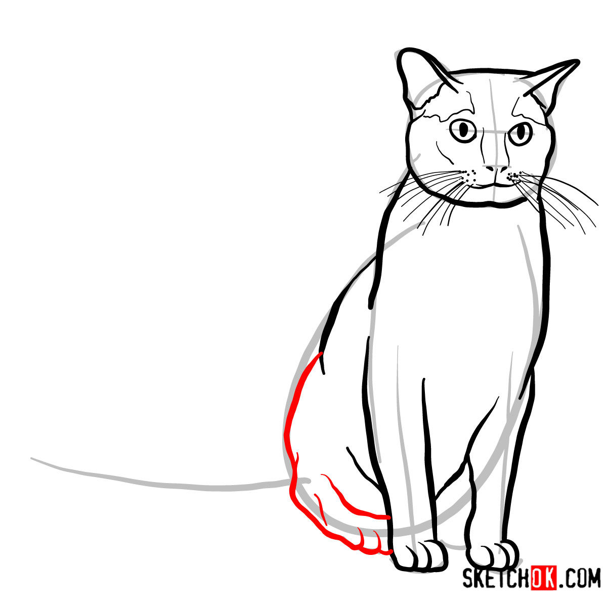 How to draw the Burmese cat - step 08