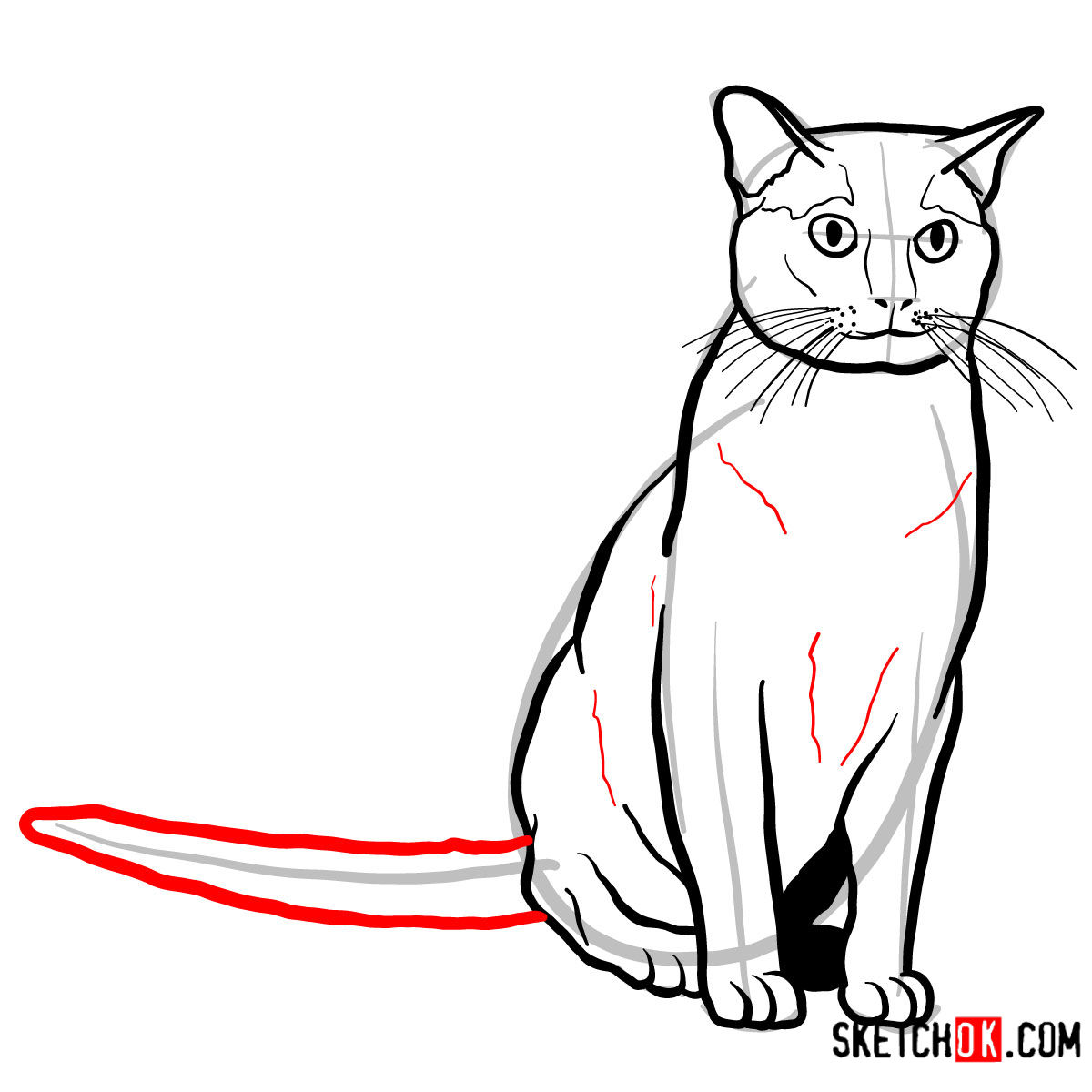 How to draw the Burmese cat - step 10