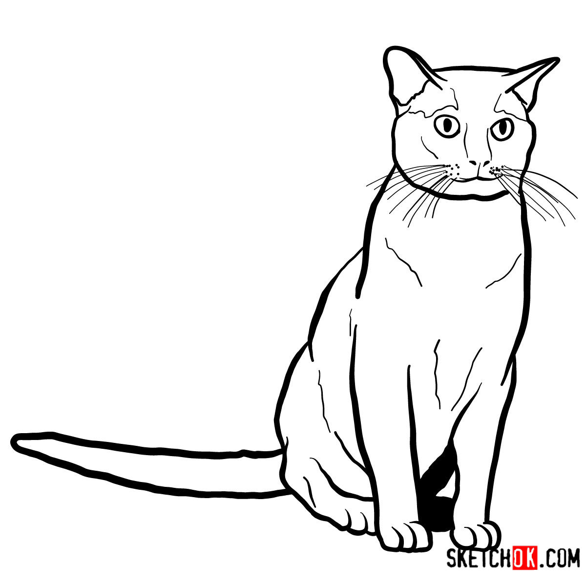 How to draw the Burmese cat - step 11