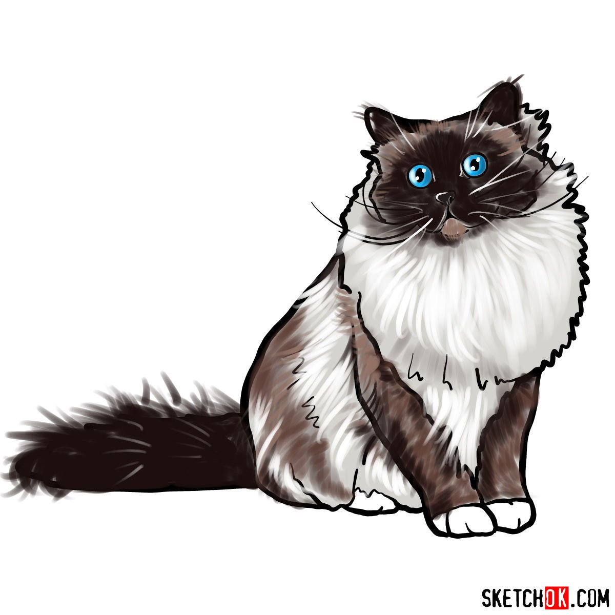 How to draw the Birman cat