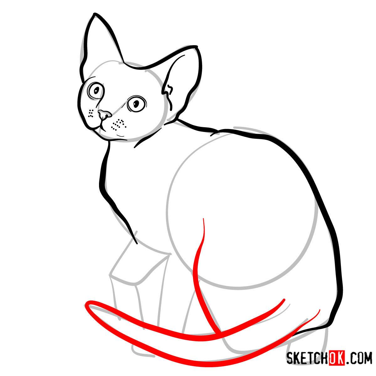 How to draw the Devon Rex cat - step 07
