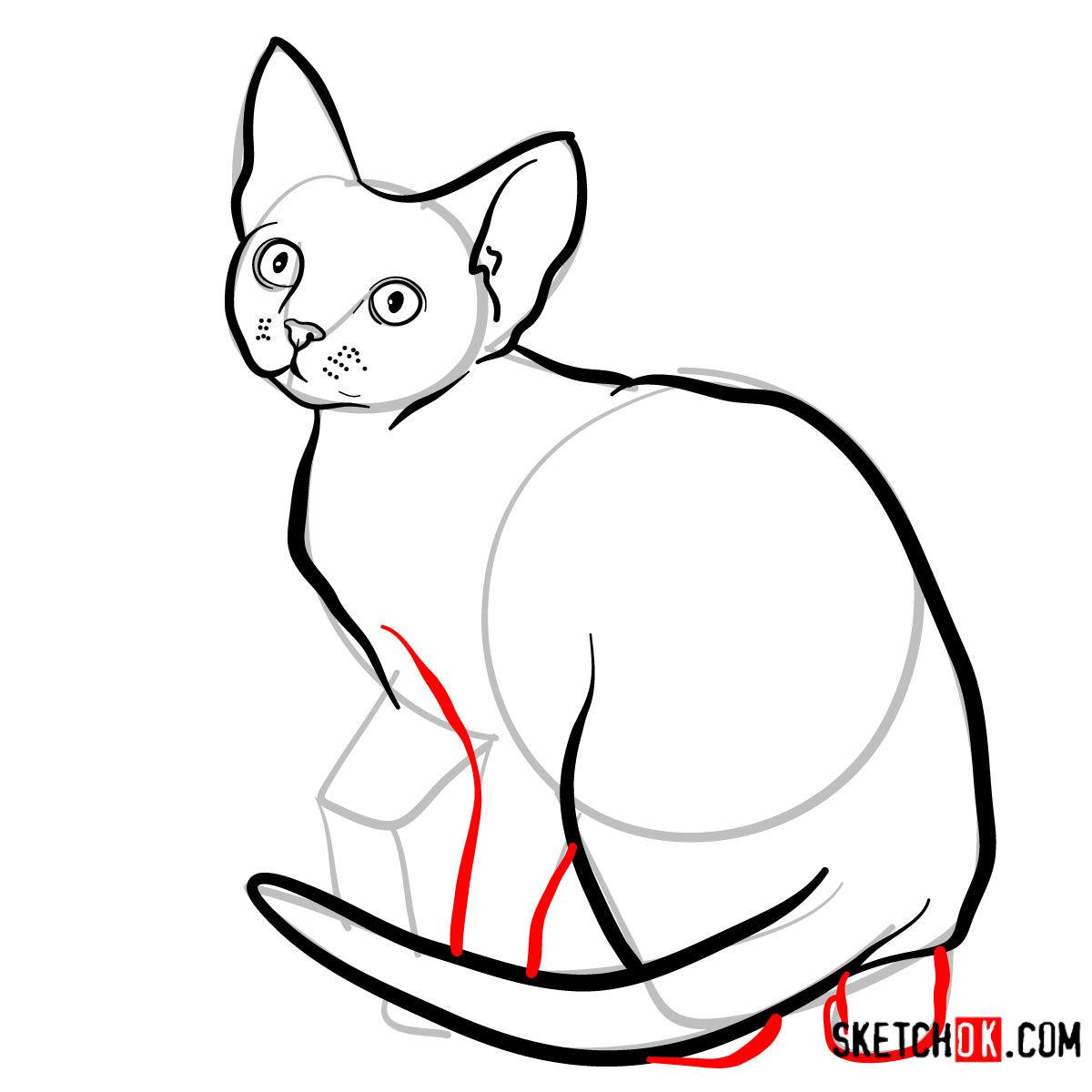 How to draw the Devon Rex cat - step 08