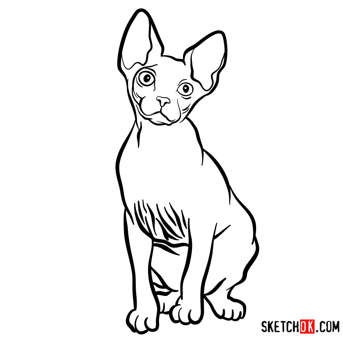 How to draw the Sphynx cat - coloring
