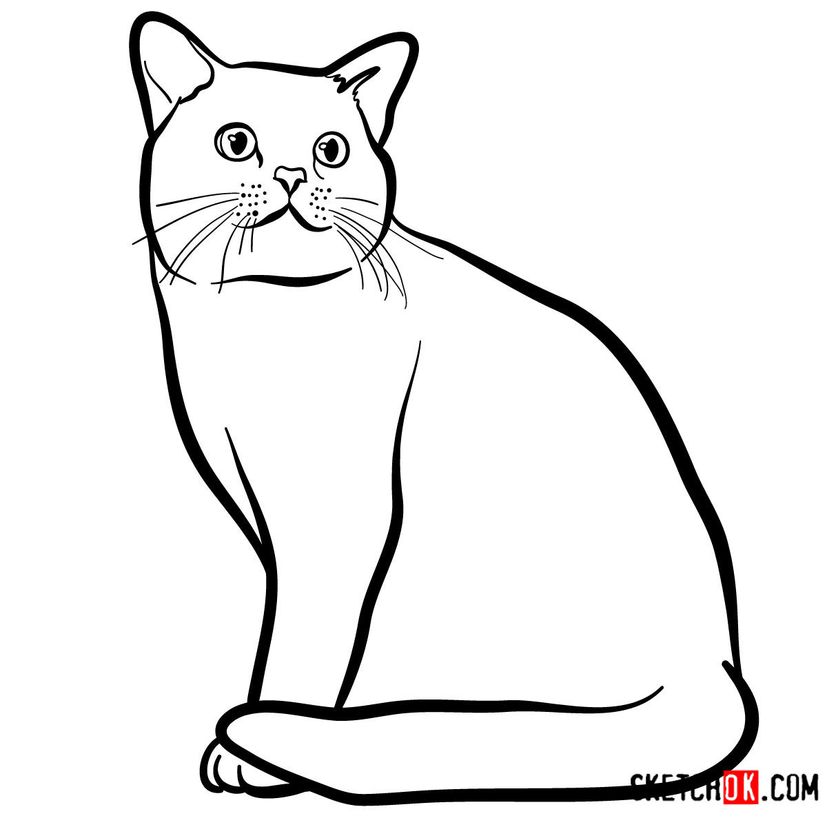 How to draw the American Shorthair cat