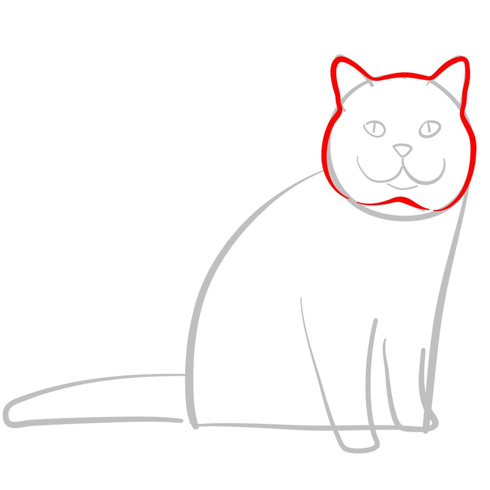 How to draw the British Shorthair cat - step 03