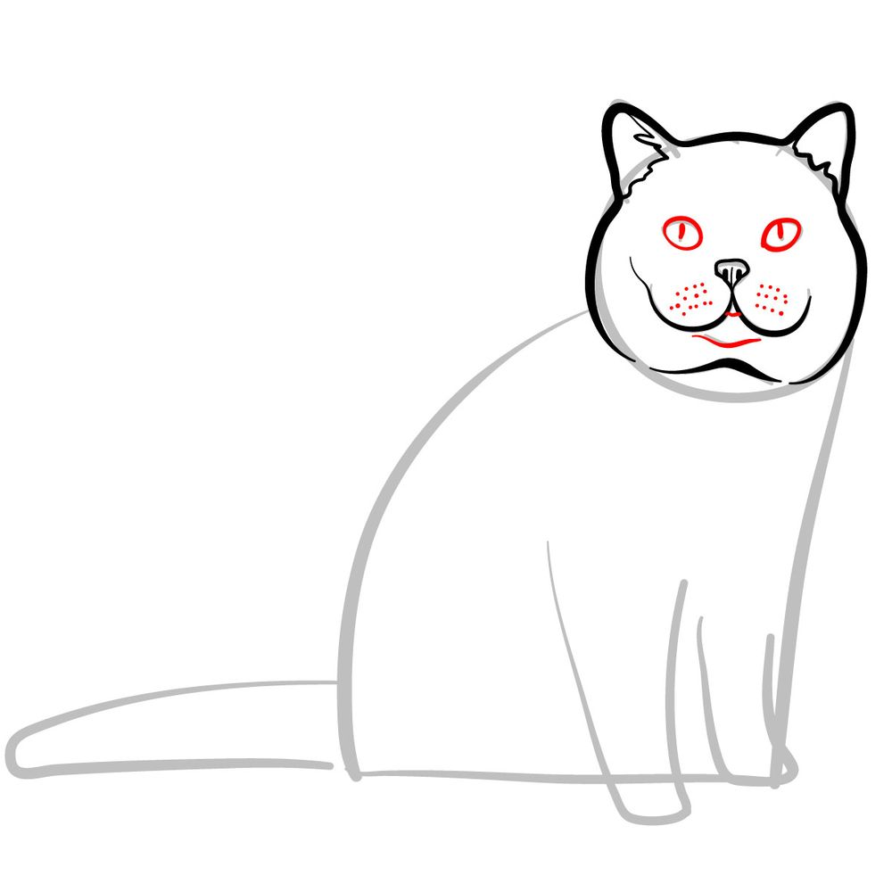How to draw the British Shorthair cat - step 05