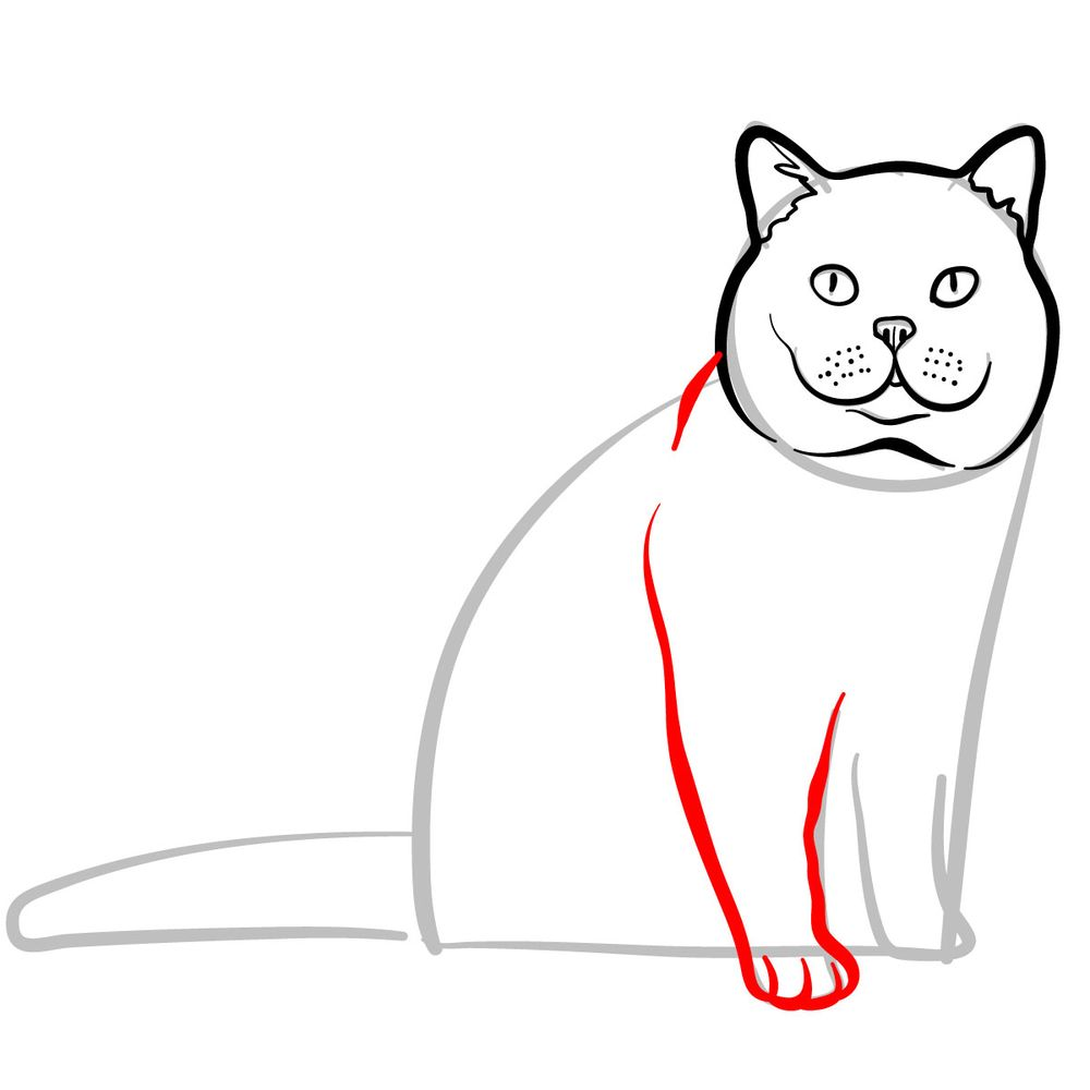 How to draw the British Shorthair cat - step 06