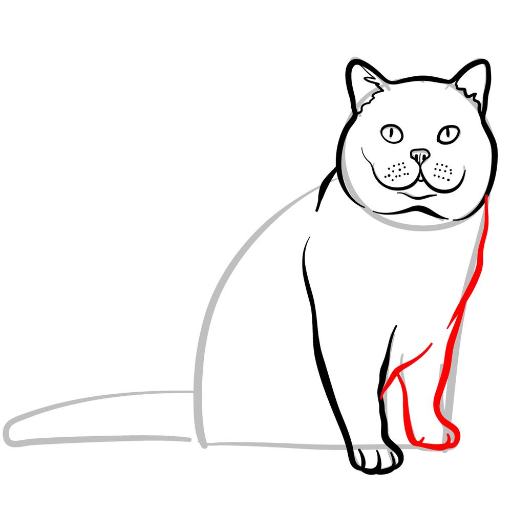 How to draw the British Shorthair cat - step 07