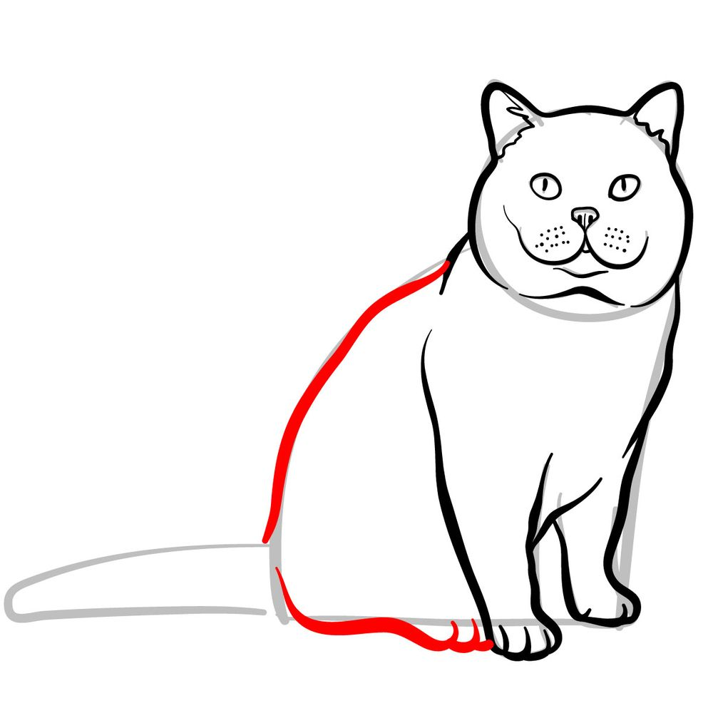 How to draw the British Shorthair cat - step 08