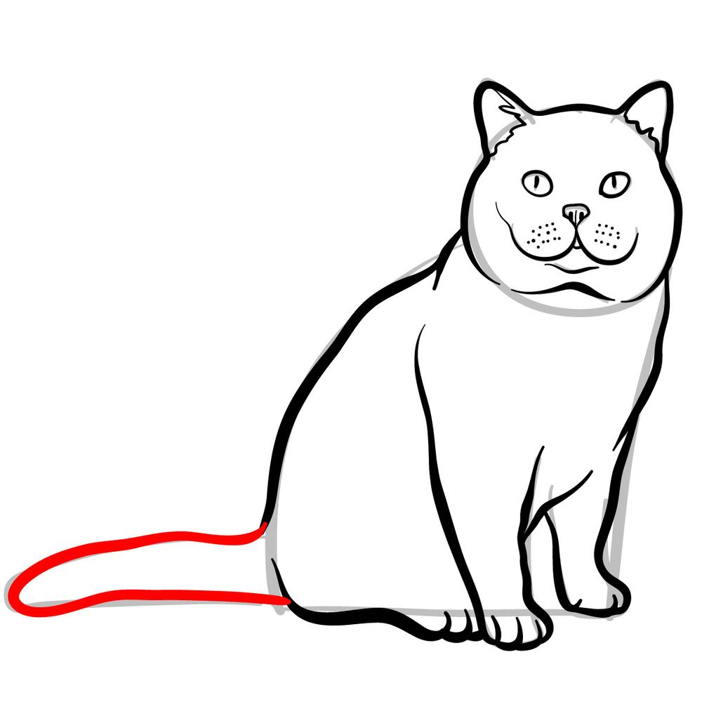 How to draw the British Shorthair cat - step 09