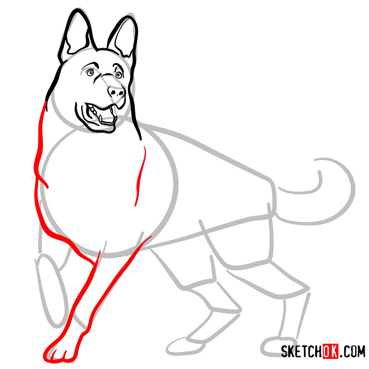 How to draw the German Shepherd dog - step 07