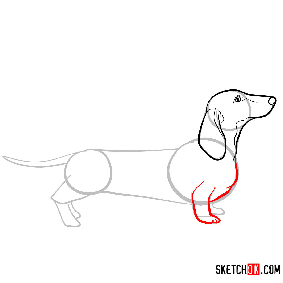 How to draw the Dachshund dog - step 05