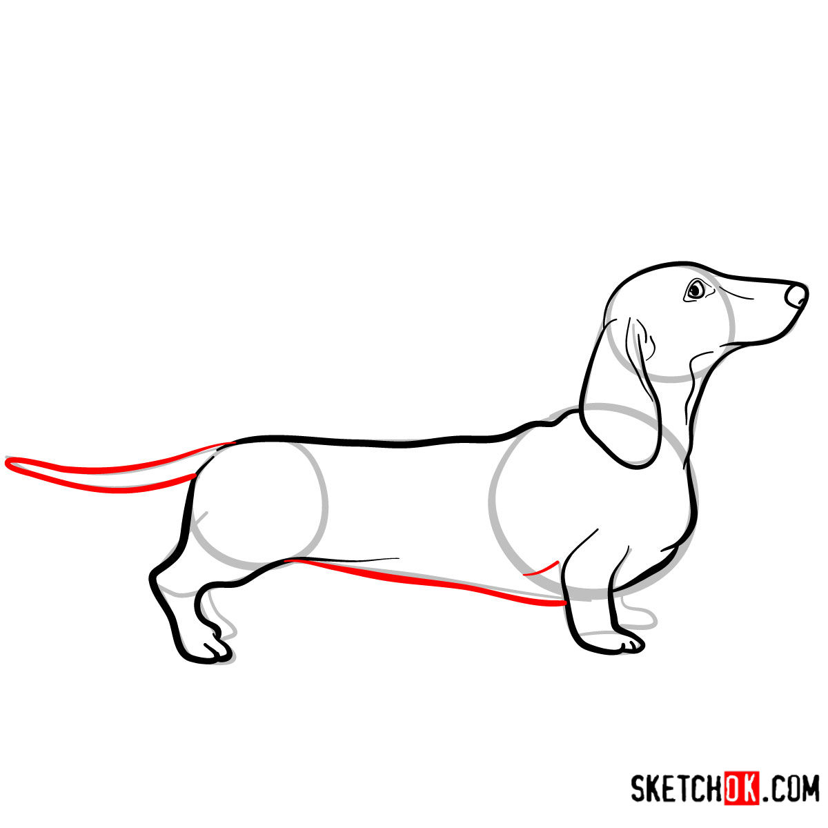 How to draw the Dachshund dog - step 07