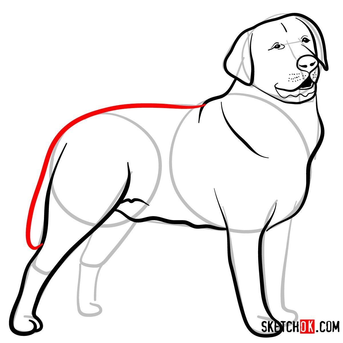 How to draw the Labrador Retriever dog - step 08