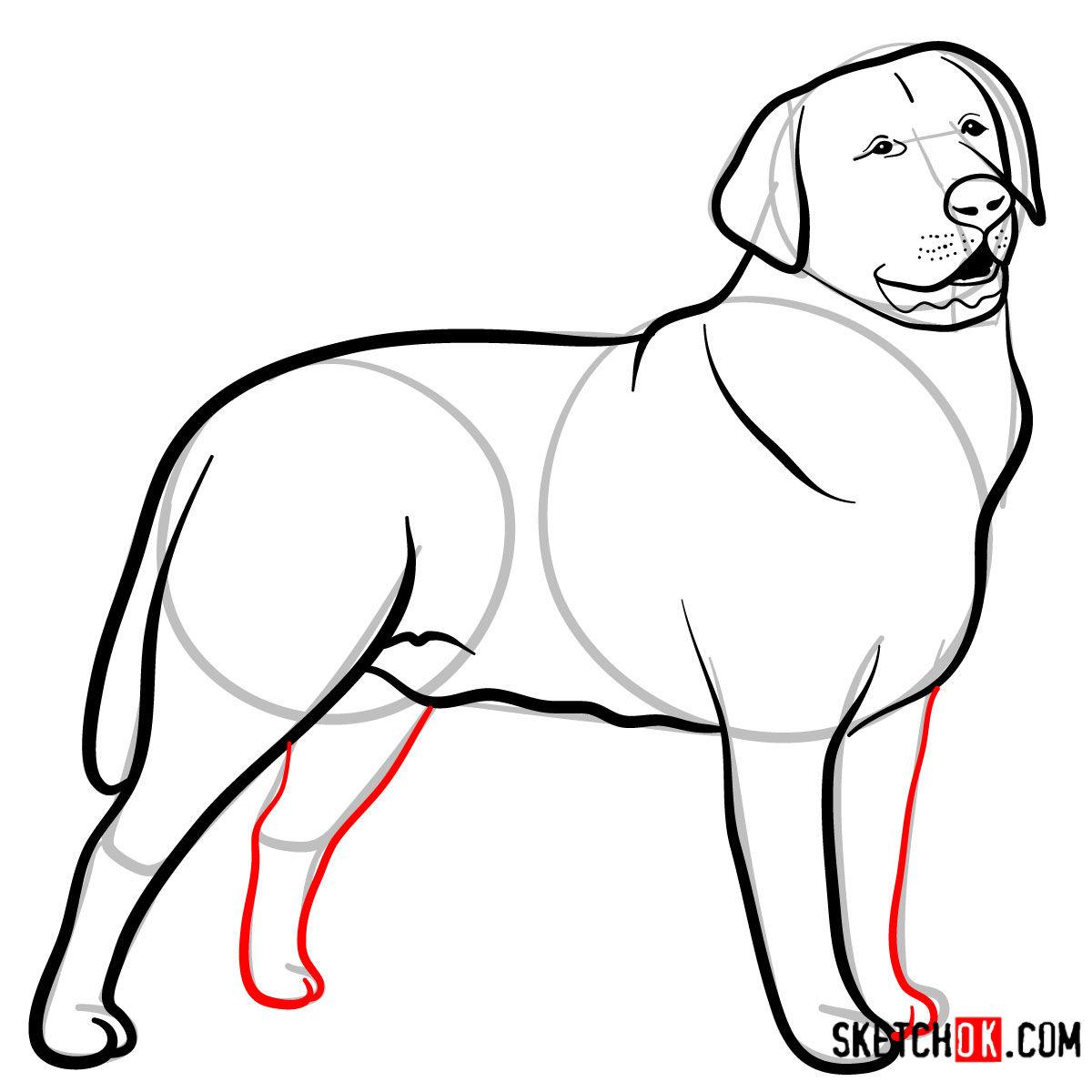 How to draw the Labrador Retriever dog - step 09