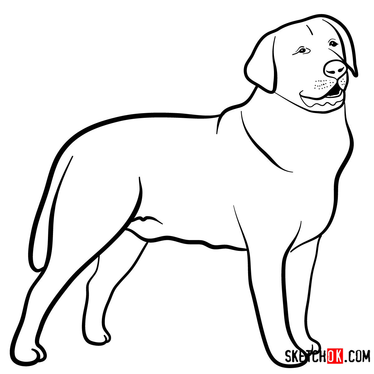How to draw the Labrador Retriever dog