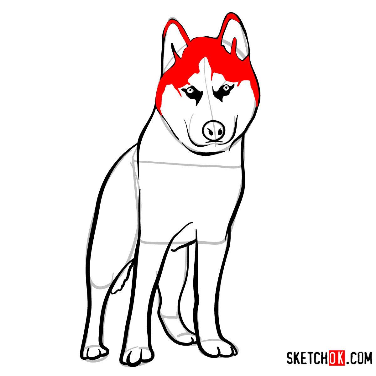 How to draw the Husky dog - step 09