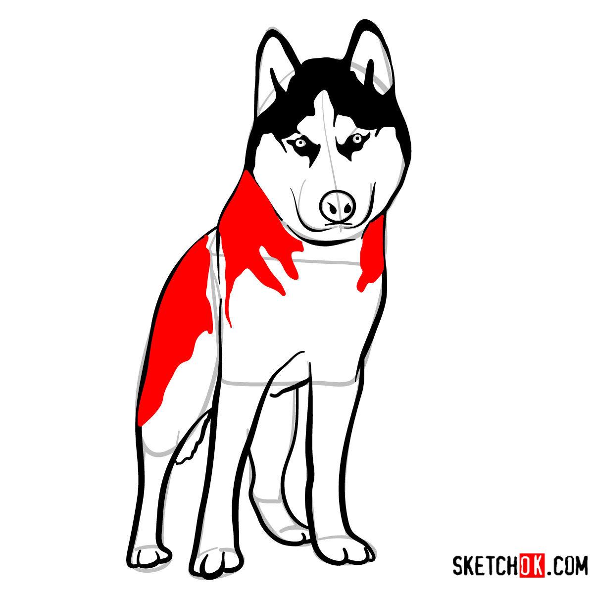 How to draw the Husky dog - step 10