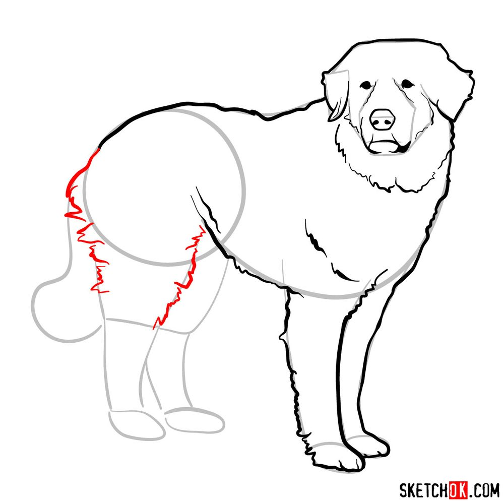 How to draw a Great Pyrenees - step 10