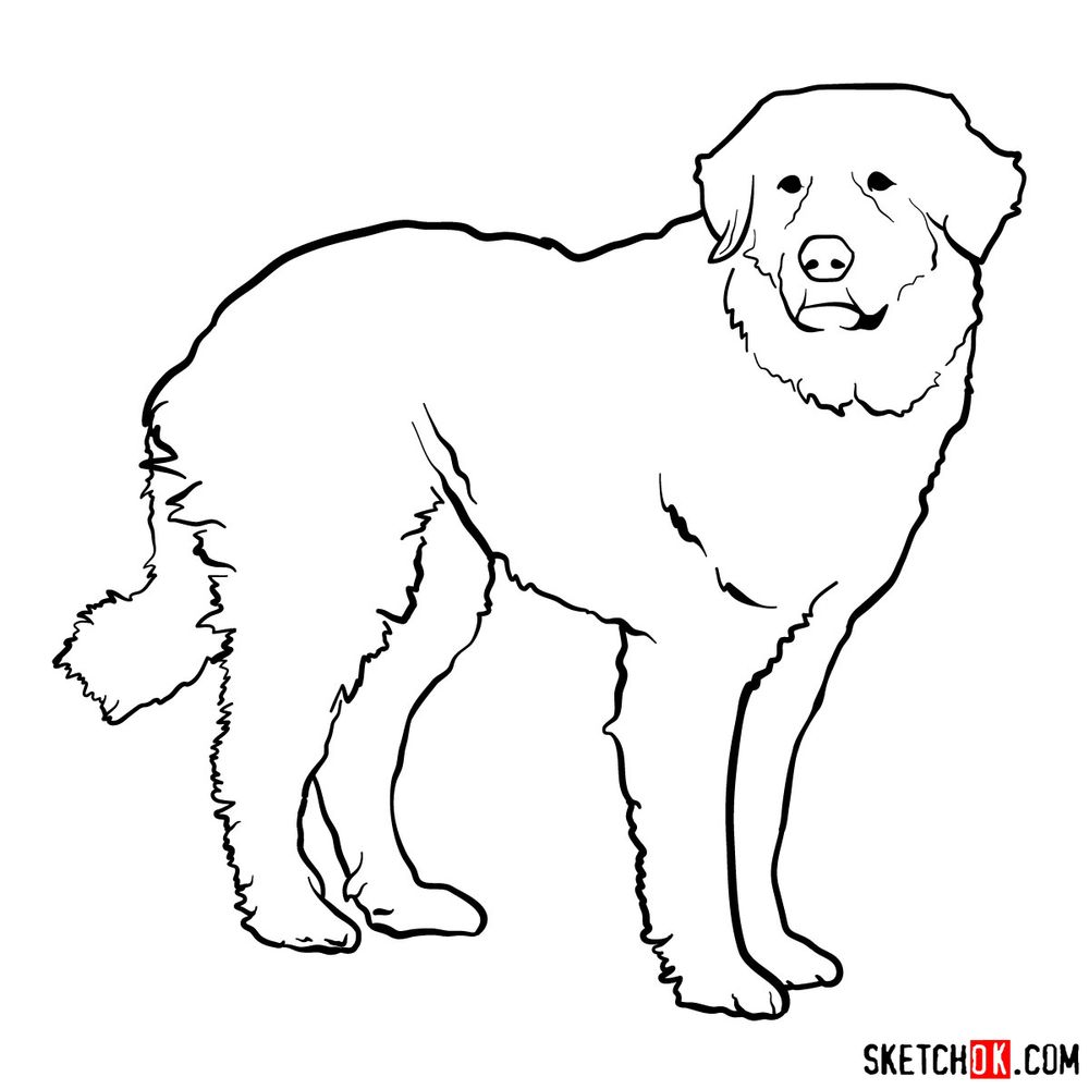 How to draw a Great Pyrenees - step 14