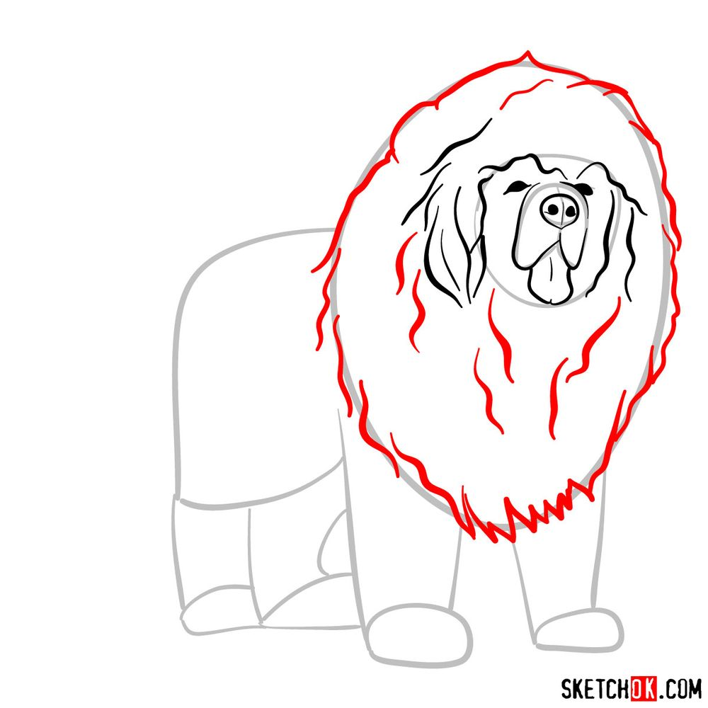 How to draw a Tibetan mastiff - step 06