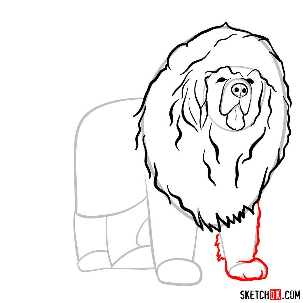 How to draw a Tibetan mastiff - step 07