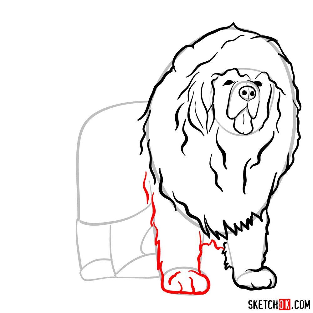 How to draw a Tibetan mastiff - step 08