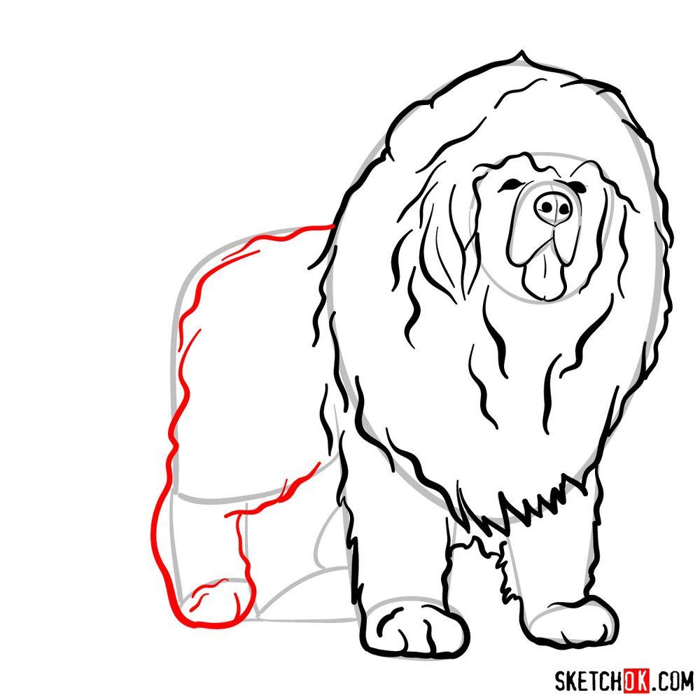 How to draw a Tibetan mastiff - step 09