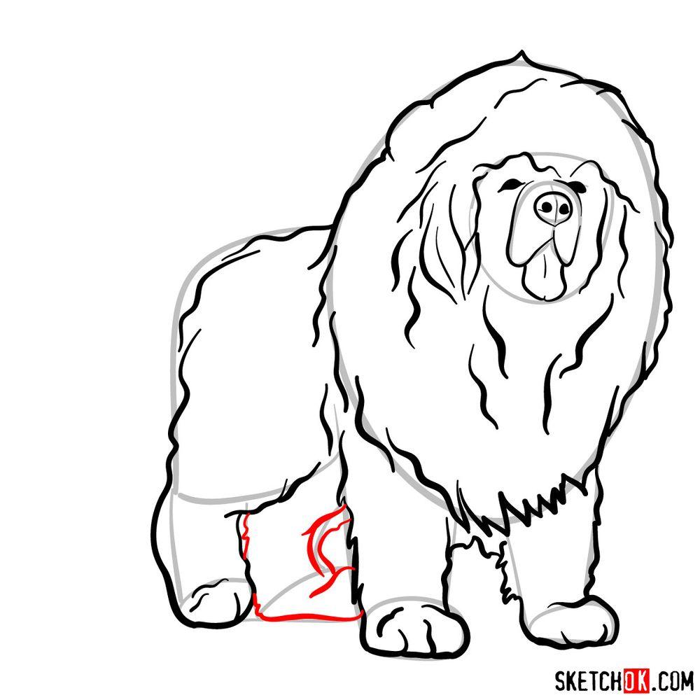 How to draw a Tibetan mastiff - step 10