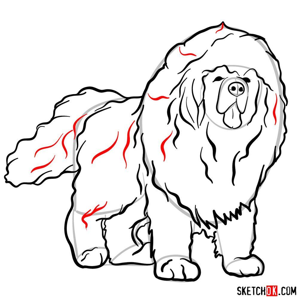 How to draw a Tibetan mastiff - step 12