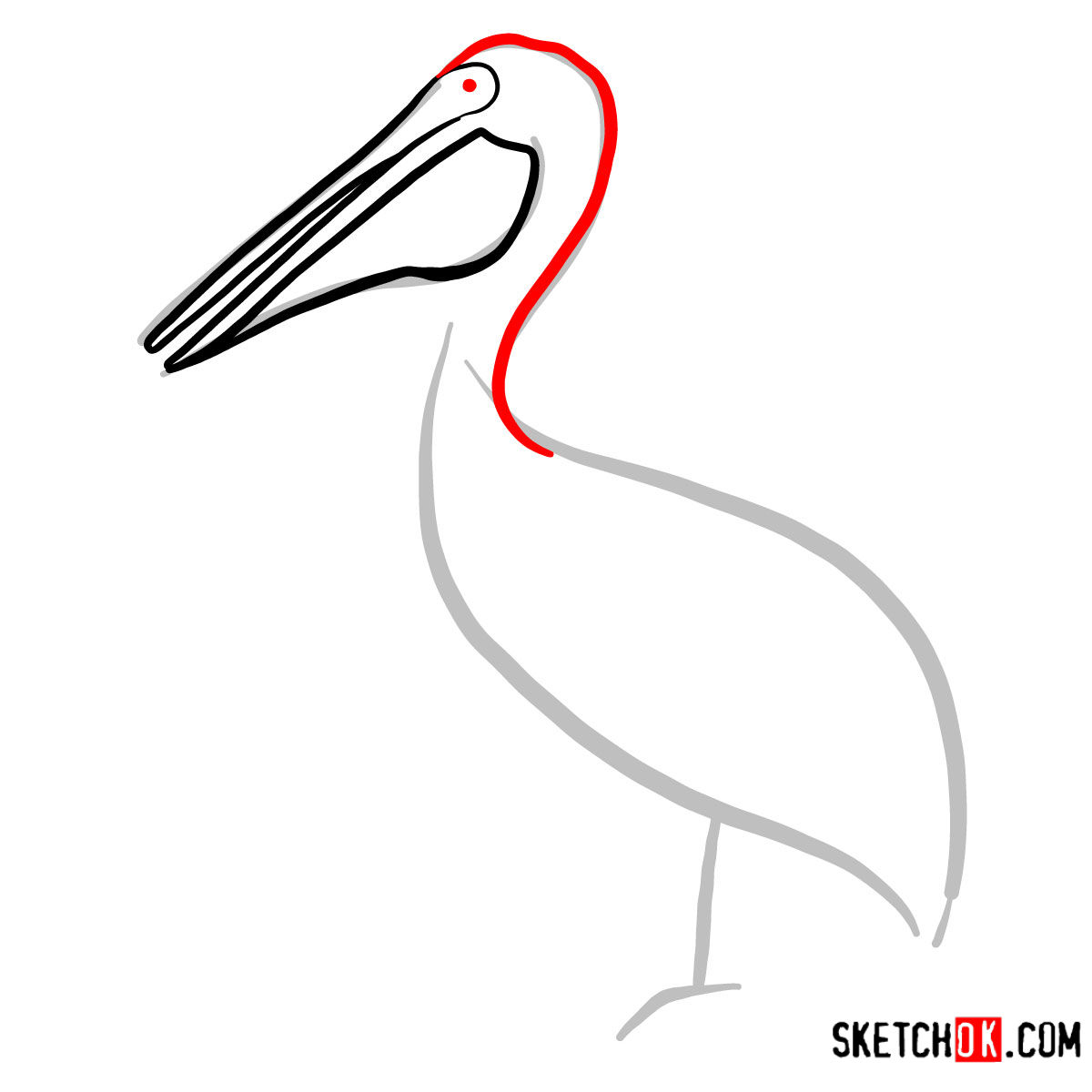 How to draw a Pelican | Birds - step 03