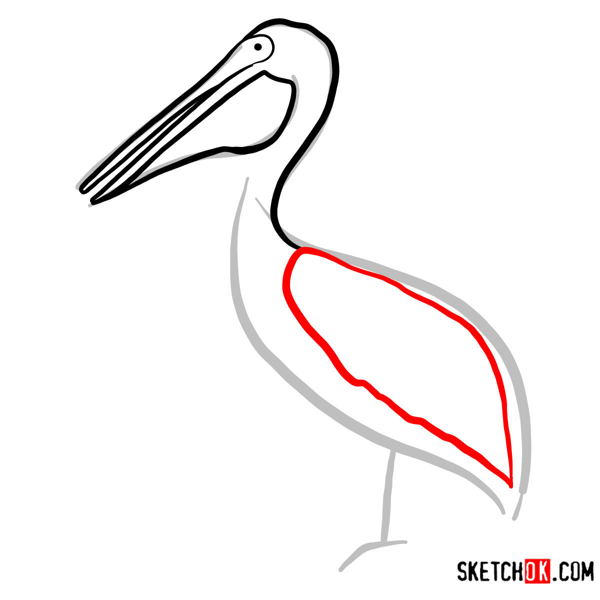 How to draw a Pelican | Birds - step 04