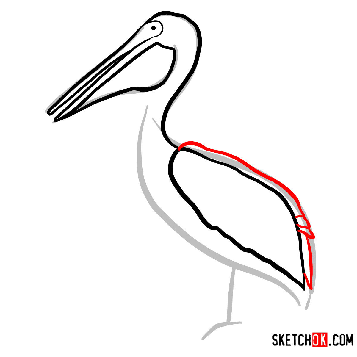 How to draw a Pelican | Birds - step 05