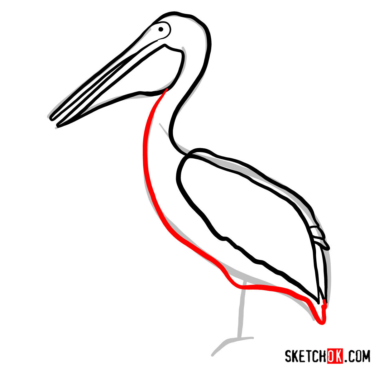 How to draw a Pelican | Birds - step 06