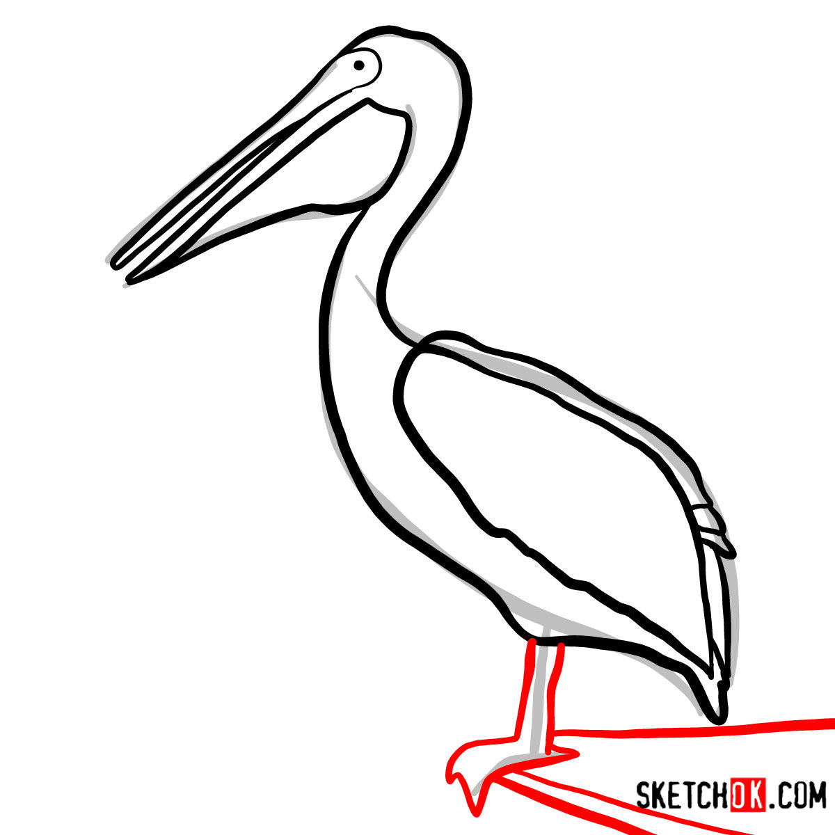 How to draw a Pelican | Birds - step 07
