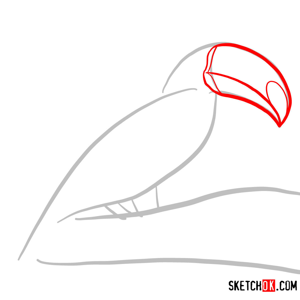 How to draw a Toucan | Birds - step 02