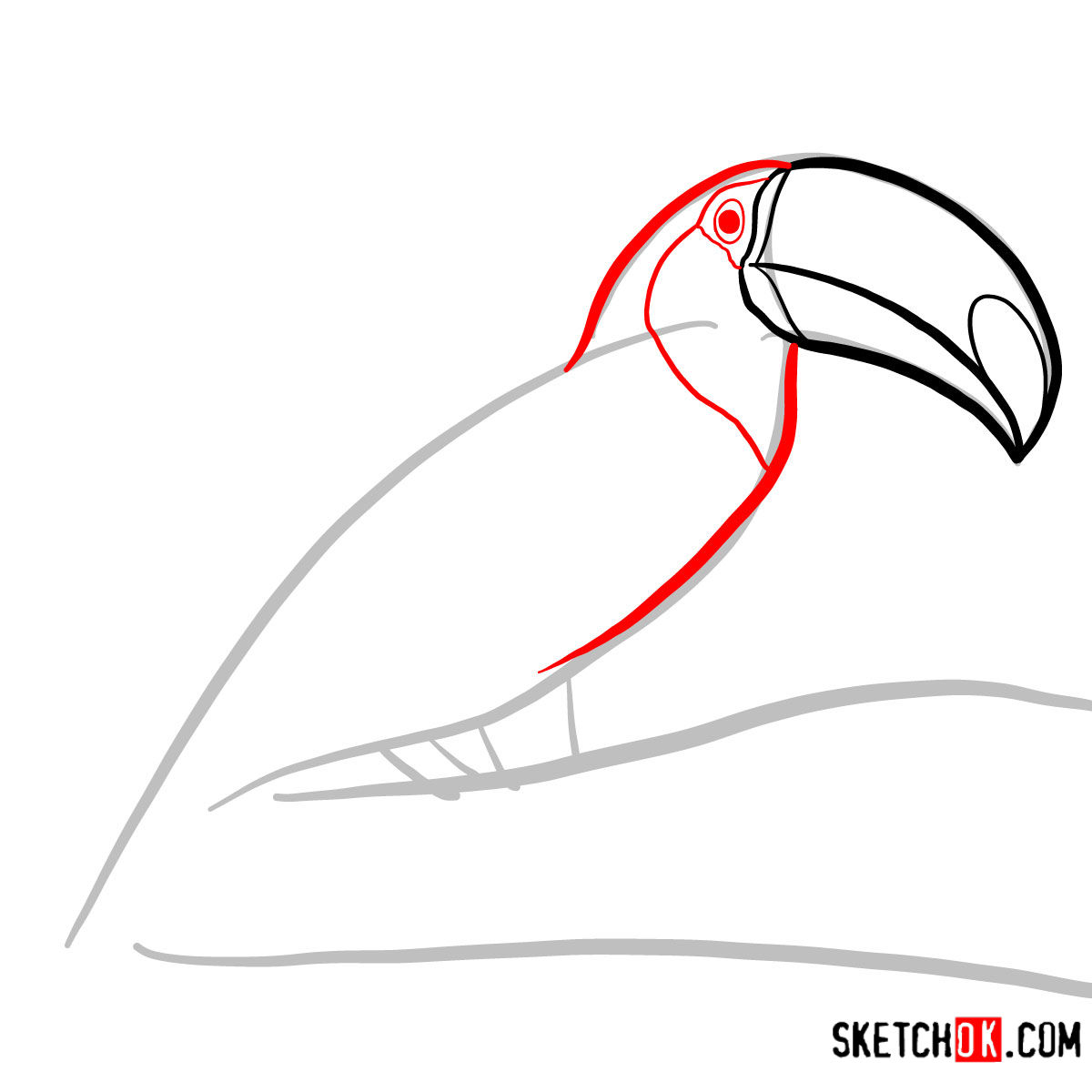 How to draw a Toucan | Birds - step 03