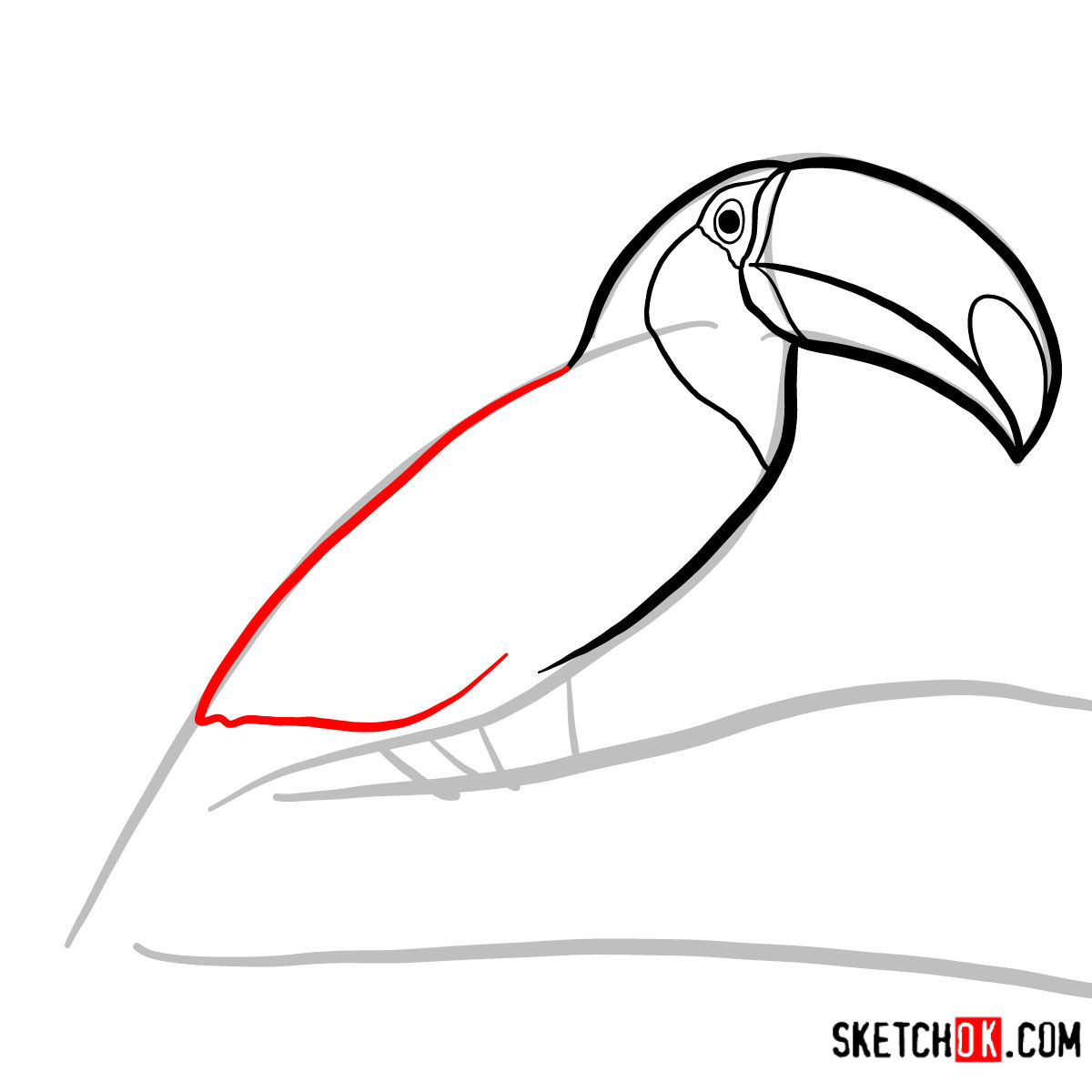 How to draw a Toucan | Birds - step 04