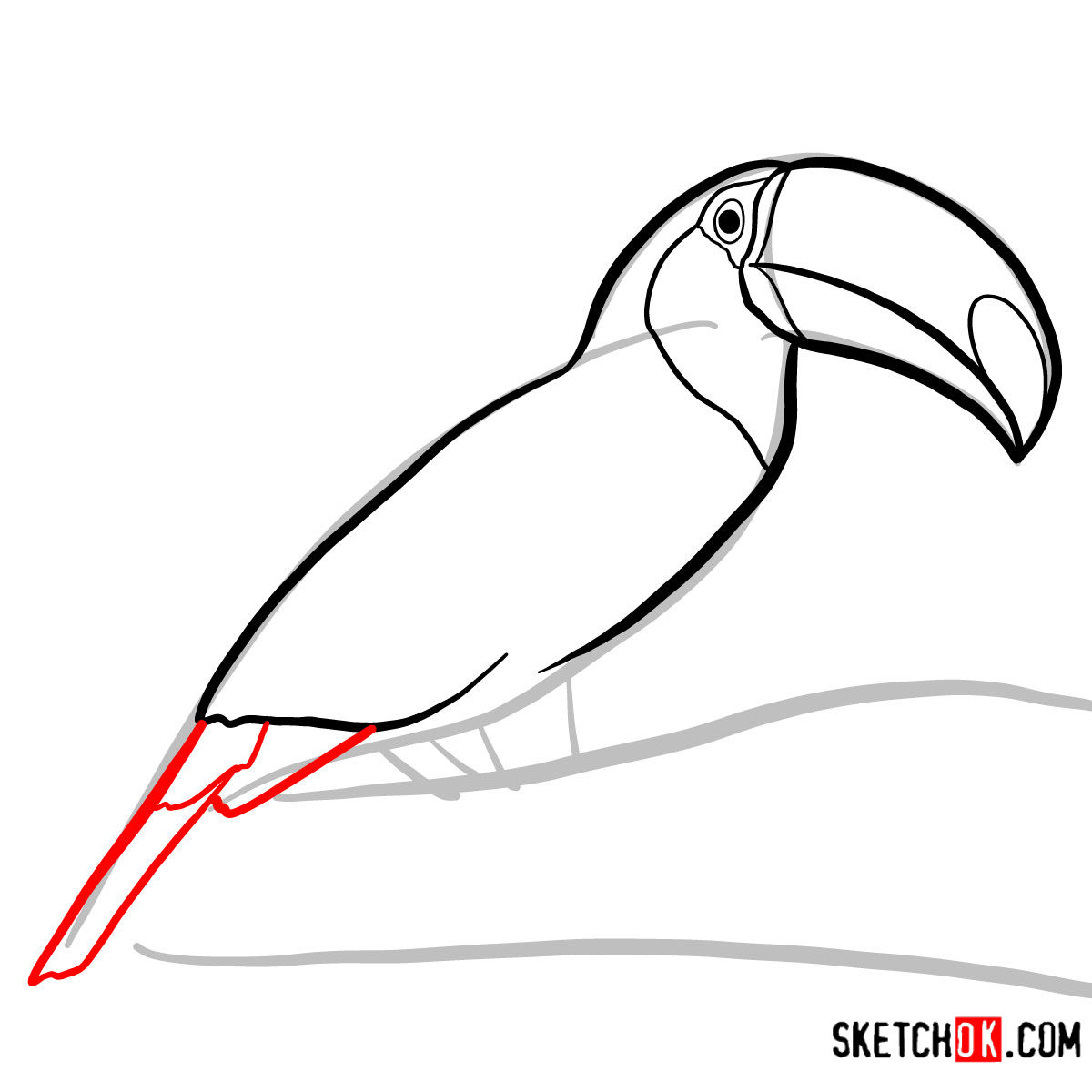 How to draw a Toucan | Birds - step 05