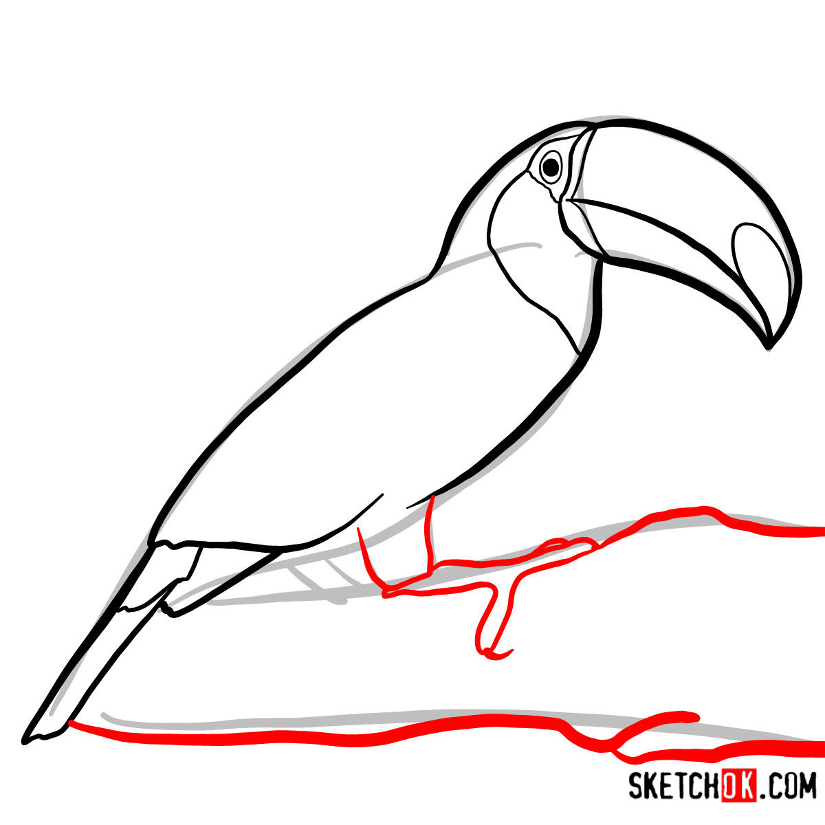 How to draw a Toucan | Birds - step 06